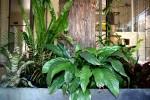 Special care garden