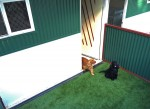 Luxury Units for indoor pets -  Check out the small dog and cat & dog shared accommodation with a