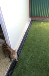 Luxury Units for indoor pets -  One of our happy cat guests enjoying a unit to themself