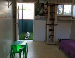 Luxury Units for indoor pets -  inside to outside view of the combined cat & small dog unit looki