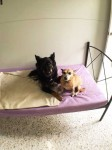 Luxury Units for indoor pets -  Always time for a quick cuddle