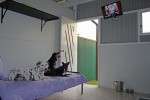 Luxury Units for indoor pets -  Midday movie time