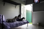 Luxury Units for indoor pets -  Lots of room on the bed to make friends, and watch abit of TV