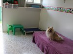 Luxury Units for indoor pets -  Zues the Pomeranian shows off his room